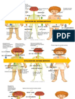 Cerebro Linea de Tiempo PDF-1