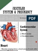 Cardiovascular System Pregnancy