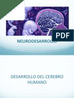 BASES DEL NEURODESARROLLO (1) (2).pdf