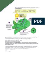 Photosynthesis.docx