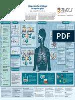 Cellular Biology of Respiratory System