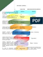 DINÁMICA ESPIRAL.docx