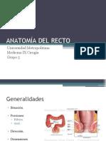 ANATOMÍA DEL RECTO y fistulas perianales