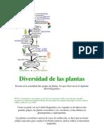 Diversidad de Las Plantas