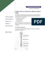 Northwestern Medicine Folleto Sobre La Lesion de La Medula Espinal