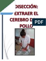 CERERBO DE UN POLLO.docx