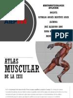 Atlas muscular de la EEII.pptx