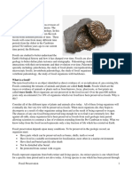 Fossil Preservation Lab. 2 Help