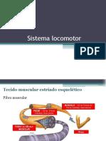 Sistema Locomotor