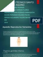 Aparato Reproductor Masculino y Femanino (2)