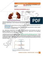 Insuficiencia Suprarrenal Parte 1