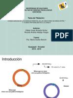 Diapositivas Sustentación final.pptx