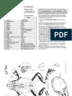 FrogAnatomy.pdf