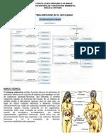 Sistema-Endocrino 2019 .docx
