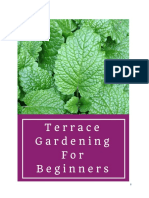 Terrace Gardening for Beginners