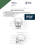 Fixação Sistema Esquelético - Crânio.pdf