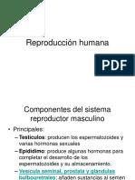 Reproduccionhumana (1)