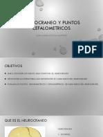 Neurocraneo y Puntos Cefalometricos (ANATOMIA)