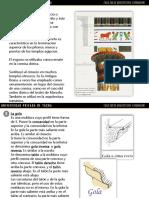 PATRIMONIO CULTURAL MOLDURAS.pptx