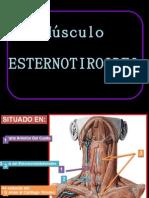 Esternotiroideo