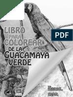 IluminarGuaca Verde(Low)