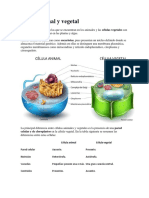 Célula Animal y Vegetal