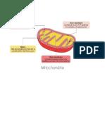 Mitochondria, ETC Visuals