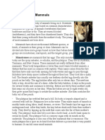 three types of mammals reading.pdf