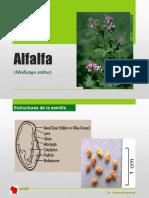 2 Alfalfa Caracteristicas