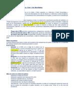 Tema 10. Inhibidores de La Síntesis de Proteínas-parte 1-8pag-25bs (1)