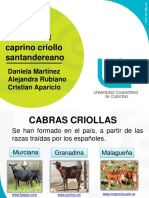 Cabra Santandereana