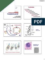 1.Toxoplasmosis