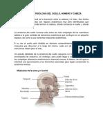 Anatomía y fisiología  de cuello,hombros y cabeza