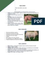 Caracteristicas de Razas de Porcinos