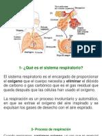 Sistema Respiratorio Exposicion