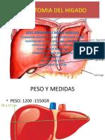 Anatomia Del Higado