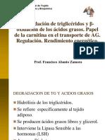 DECRADACION-TRIGLICERIDOS- LIPIDOS