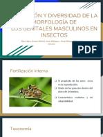 Evolucion de aparatos reproductores de insectos