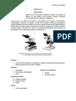 Practica Laboratorio - microscopia