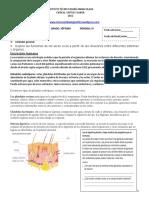 excrecion -en-el-ser-humano1 guia.pdf