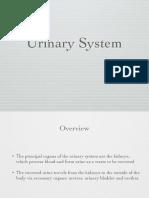 11. Urinary System-2.pdf