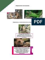 Adaptaciones estructurales imprimir.docx