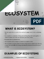 Ecosystem Group 3