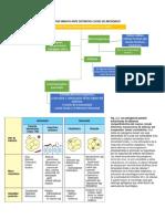 Funciones de Las Células de La Respuesta Inmune Innata