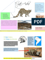 Infografia Gato Andino -Segundo G