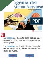 Sesion 2- Filogenia y Ontogenia