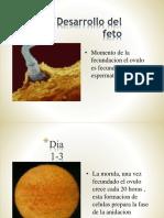 DESARROLLO FETAL.pptx