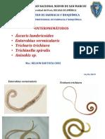nemátodos enteroparásitos 1