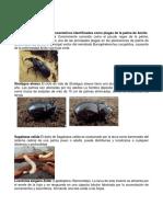 Órdenes más representativos identificados como plagas de la palma de Aceite.pdf