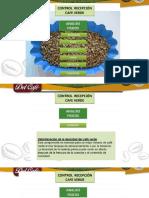 Control de Recepcion Del Cafe Verde